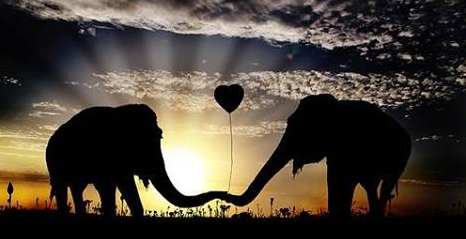 elephant can die of broken heart - from emaze